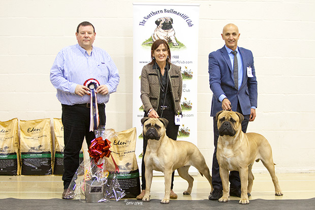 Northern Bullmastiff Club Ch. Show 2019
